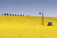 Agriculture Victoria On-Farm Trial
